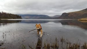 Koopa at Derwentwater
