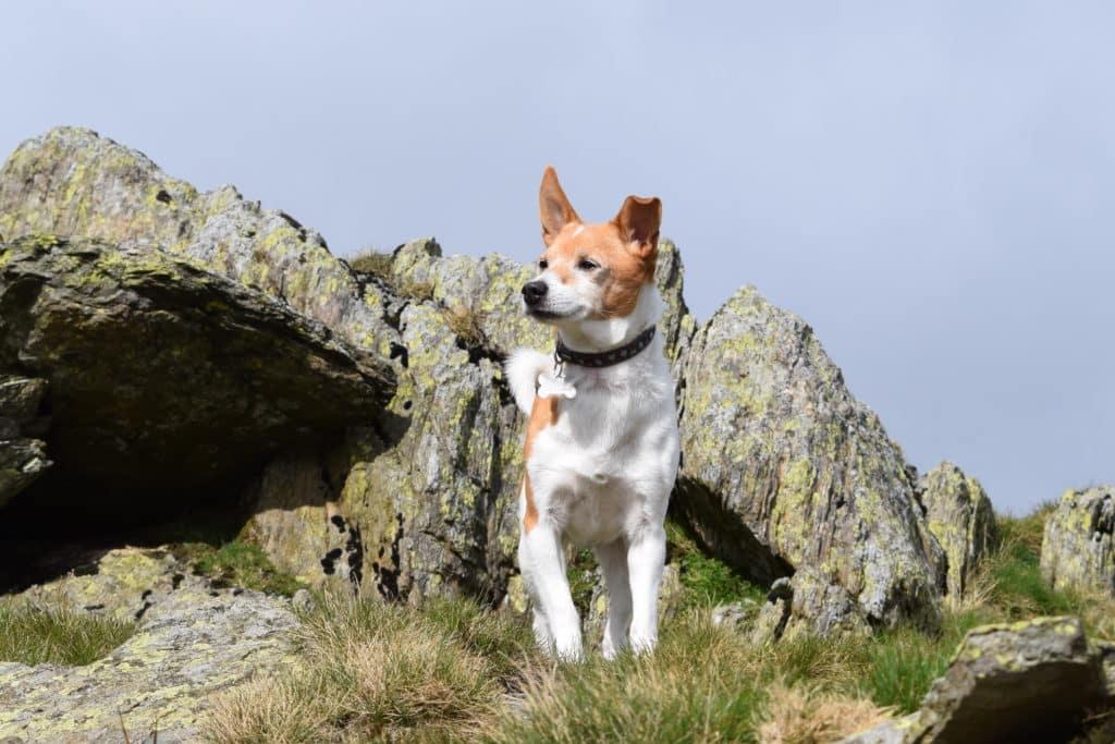 Bob the Dog, Keswick Holiday Homes